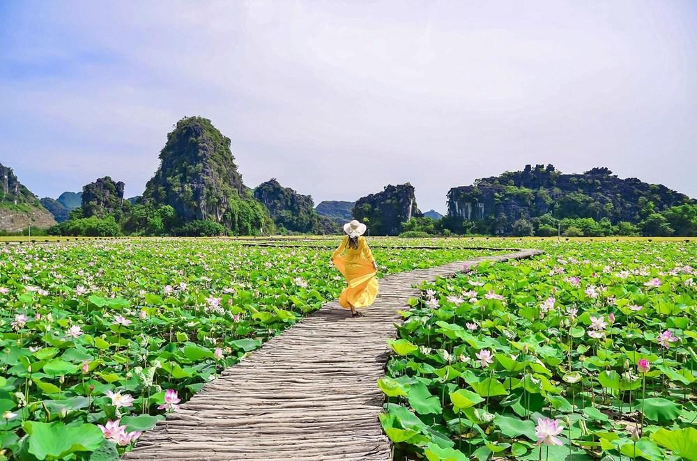 [Photo] Kham pha dam sen duoc menh danh dep nhat Viet Nam hinh anh 2