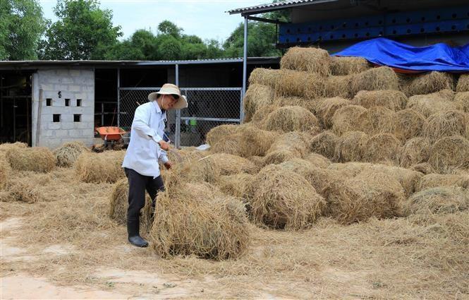 Giải pháp hữu hiệu giúp nông dân xử lý rơm rạ sau thu hoạch - 1
