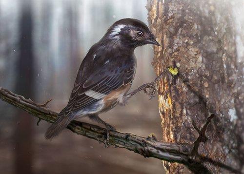 Phát hiện một giống chim mới thời tiền sử ở miền Bắc Myanmar - 1