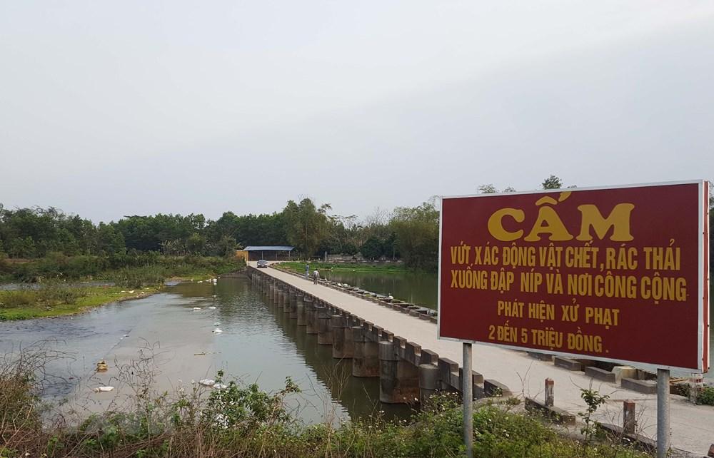 Thái Nguyên: Gia cầm chết vứt ngổn ngang gây ô nhiễm nghiêm trọng