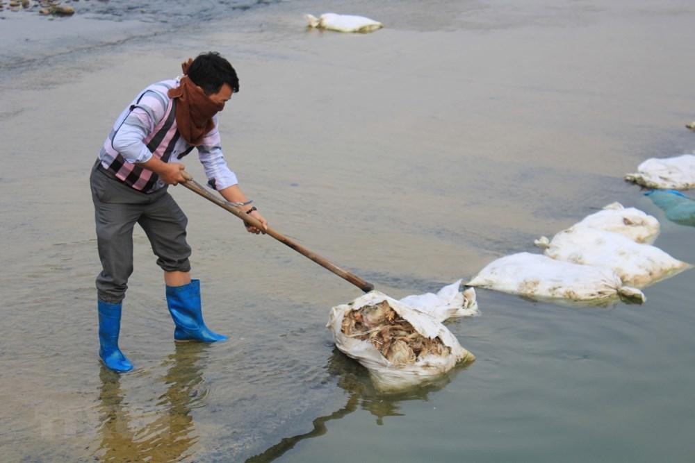 Thái Nguyên: Gia cầm chết vứt ngổn ngang gây ô nhiễm nghiêm trọng - 1
