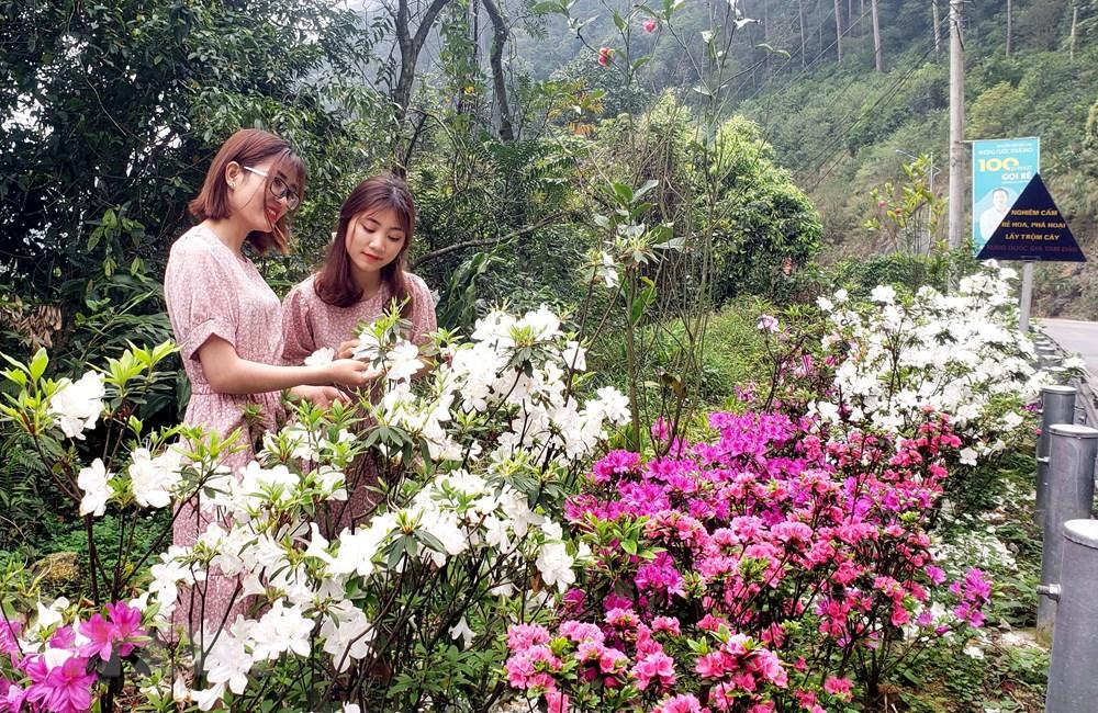 [Photo] Len Tam Dao ngam hoa do quyen bung no khoe sac hinh anh 10