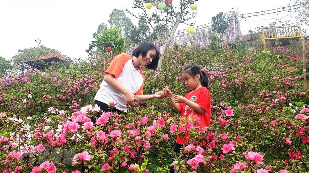 [Photo] Len Tam Dao ngam hoa do quyen bung no khoe sac hinh anh 9