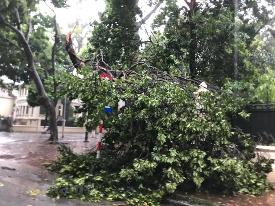 [ẢNH] Cây cối bị 'quật đổ' tại Hà Nội do ảnh hưởng của bão số 3 - 5