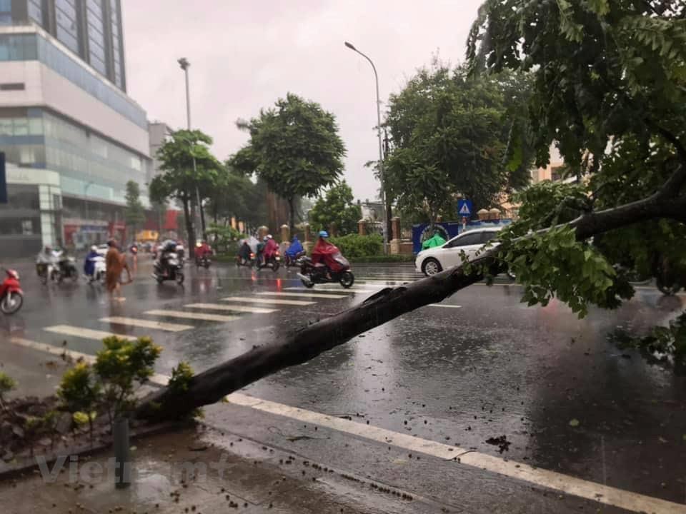 [ẢNH] Cây cối bị 'quật đổ' tại Hà Nội do ảnh hưởng của bão số 3 - 6