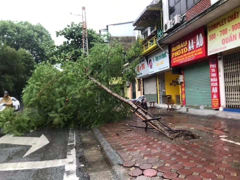 [ẢNH] Cây cối bị 'quật đổ' tại Hà Nội do ảnh hưởng của bão số 3 - 7