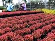 Đồng Tháp chuẩn bị 3 triệu giỏ hoa cảnh các loại phục vụ Tết