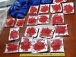 Bắt giữ số lượng lớn ma túy tổng hợp tại biên giới Việt-Lào