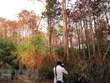 Đà Lạt xử lý nhiều công trình xây dựng trái phép, lấn chiếm đất rừng