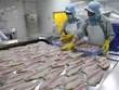 VASEP: Doanh nghiệp xuất cá tra sang Trung Quốc không bán giá thấp