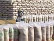 [Video] Mỹ dự báo Việt Nam vẫn đứng thứ 2 về xuất khẩu gạo