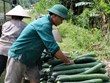 [Video] Nông dân tỉnh Hòa Bình lao đao vì vụ bí xanh mất giá