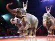 Đan Mạch tiến tới cấm sử dụng động vật trong biểu diễn xiếc