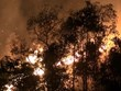 Điện Biên: Cháy rừng dữ dội trong nhiều giờ, nhiều người phải sơ tán
