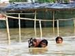 Mưa lũ hoành hành ở Nam Á, số người thiệt mạng lên tới hơn 300