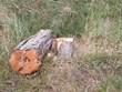 Xác định chủ mưu vụ lấn chiếm trái phép 1.250m2 đất rừng ở Đà Lạt