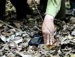 Quyết liệt xử lý tình trạng đặt bẫy tại các khu bảo tồn ở Việt Nam