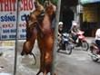 Những ý kiến trái chiều về việc có nên ăn thịt chó tại Việt Nam