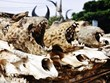 [Photo] Cận cảnh sự ghê rợn ở khu chợ dược liệu động vật