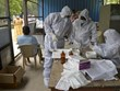 Ấn Độ, Serbia 'lập kỷ lục' về số ca lây nhiễm COVID-19 trong ngày