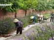 Quảng Ninh: Giương cao ngọn cờ đầu xây dựng nông thôn mới