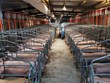 """Khủng hoảng thịt lợn khiến tài sản của nhiều """"đại gia"""" tăng vọt"""