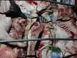 Phát hiên gần 1 tấn lợn và thịt lợn mắc dịch tả lợn châu Phi