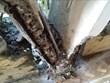 [Video] Trường Trung học phổ thông Lý Sơn có thể đổ sập bất cứ lúc nào