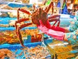 [Video] Ghé thăm chợ hải sản gần 100 tuổi tại Hàn Quốc