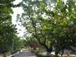 [Photo] Những mầm xanh tươi tốt trên huyện đảo Trường Sa