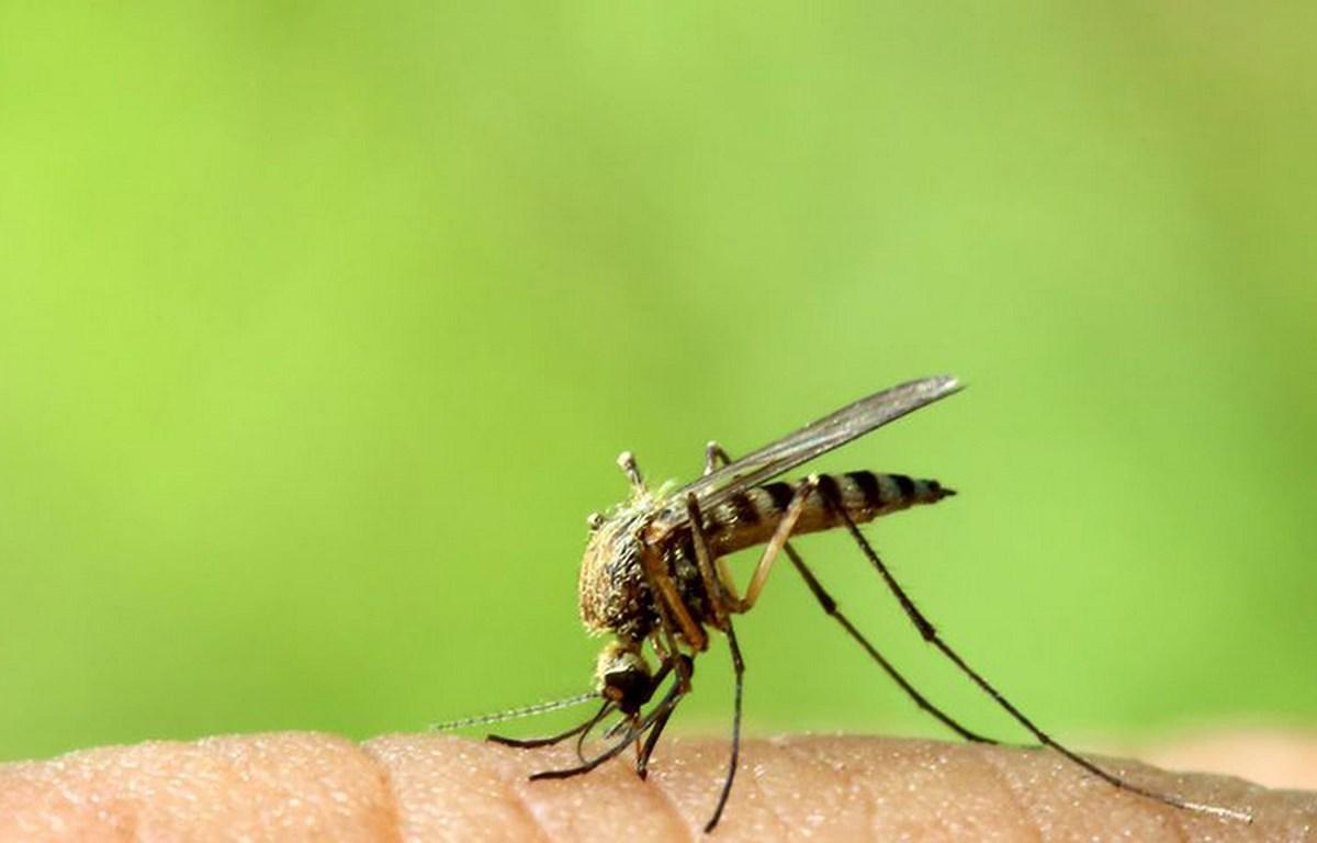 8 cách loại bỏ vết muỗi đốt và đánh bại cơn ngứa khó chịu