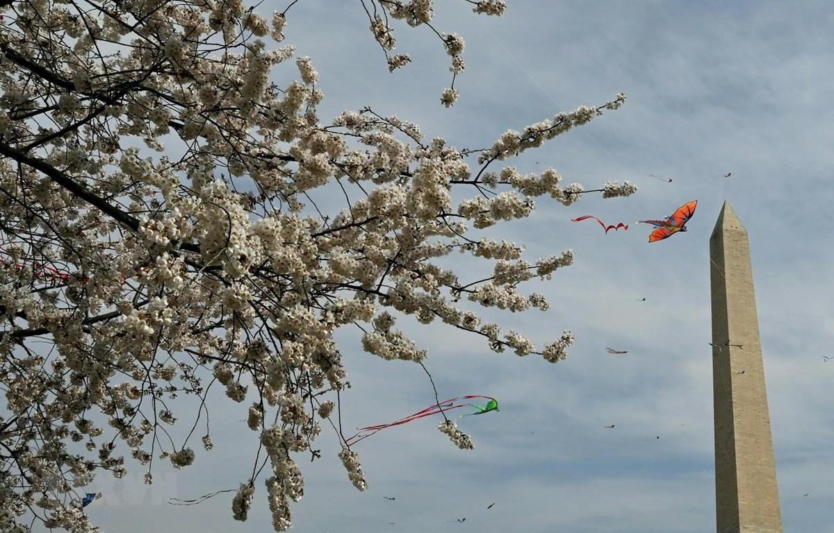 Những cánh diều tung bay trong Lễ hội thả diều mùa hoa anh đào tại Washington D.C ngày 30/3. (Ảnh: AFP/TTXVN)