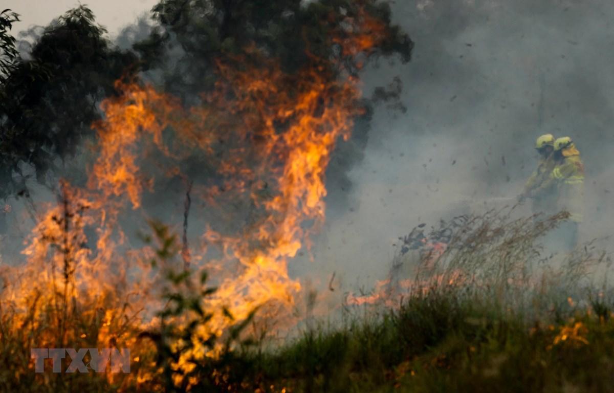 Hiện trường vụ cháy rừng gần Taree, New South Wales, Australia, ngày 11/11. (Ảnh: THX/TTXVN)