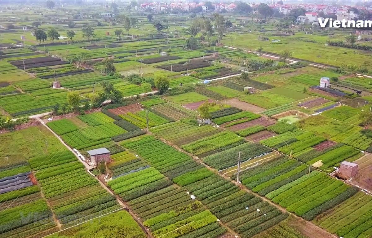 Toàn cảnh vựa rau sạch xã Tân Minh. (Ảnh: PV/Vietnam+)