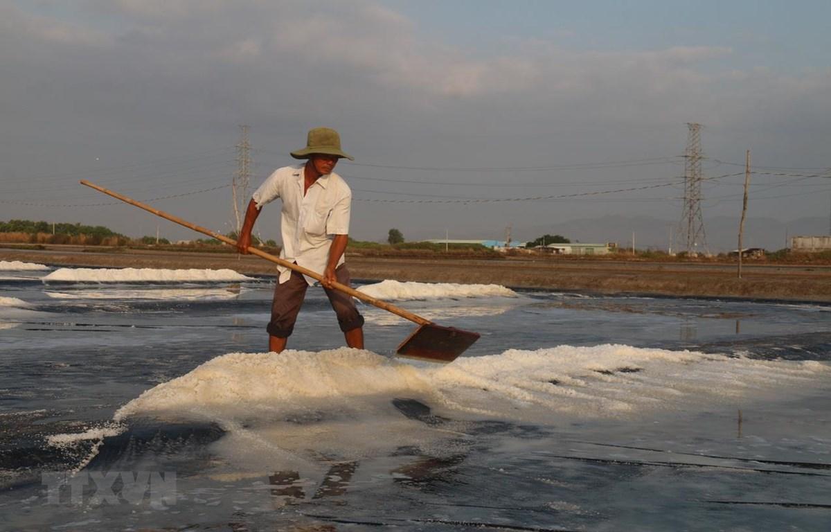 Diêm dân thu hoạch muối sản xuất theo phương pháp trải bạt. (Ảnh: Hoàng Nhị/TTXVN)