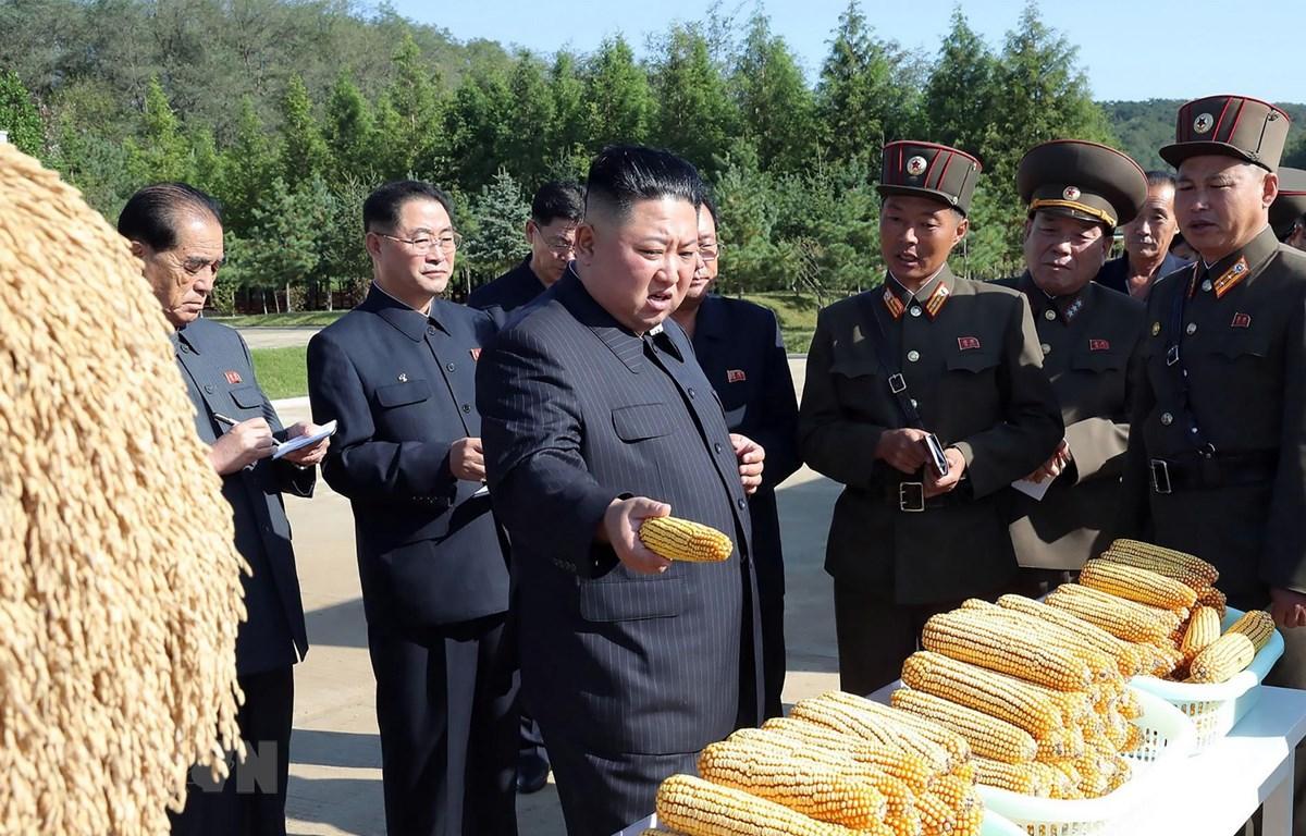 Nhà lãnh đạo Triều Tiên Kim Jong-un thị sát một nông trại thuộc đơn vị 810 của quân đội nhân dân Triều Tiên. (Ảnh: AFP/TTXVN)
