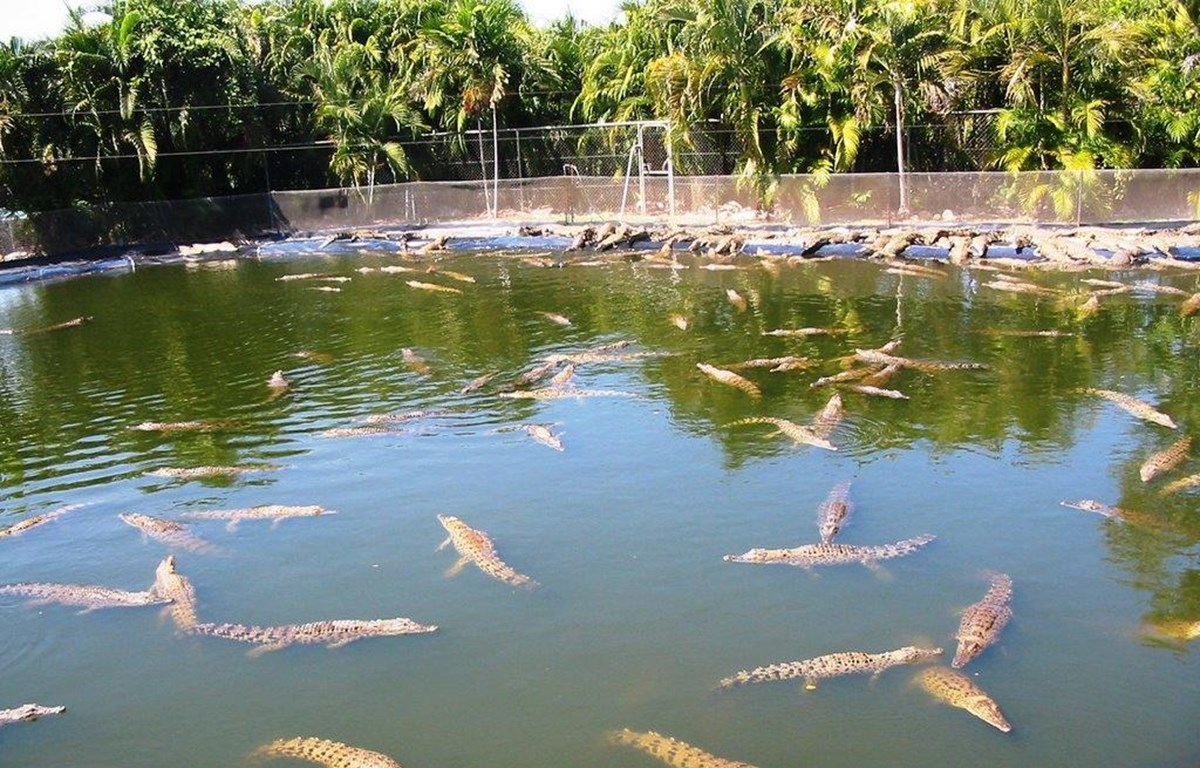 Những con cá sấu tại công viên hoang dã Crocodylus. (Nguồn: mapio.net)