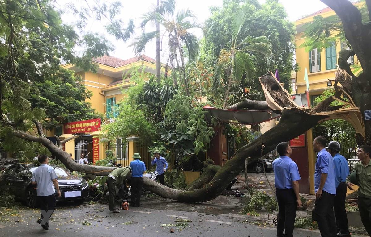 Hiện trường vụ cây cổ thụ đổ gẫy, đè bẹp ôtô và xe máy tại Hải Phòng. (Ảnh: Trần Hoàng Ngọc/TTXVN)