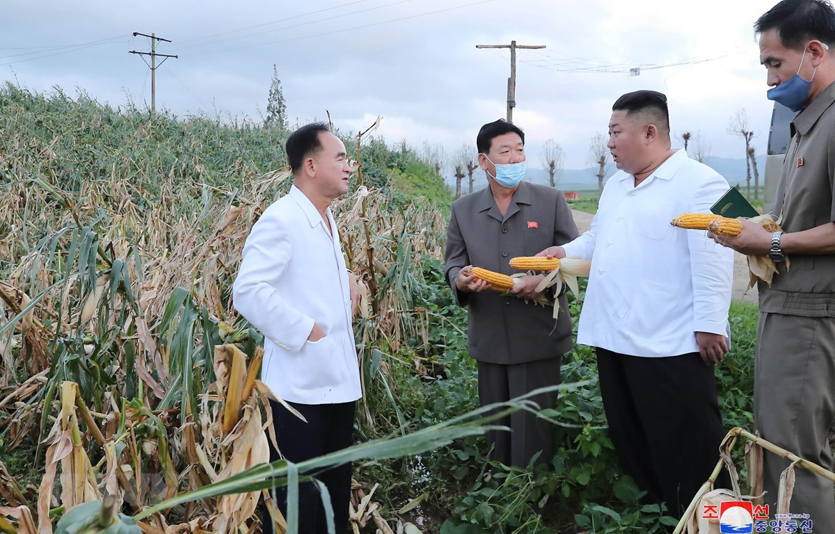 Nhà lãnh đạo Triều Tiên Kim Jong-un (thứ 2, phải) thăm khu vực bị ảnh hưởng do bão tại tỉnh Nam Hwanghae, Triều Tiên. (Ảnh: Yonhap/TTXVN)
