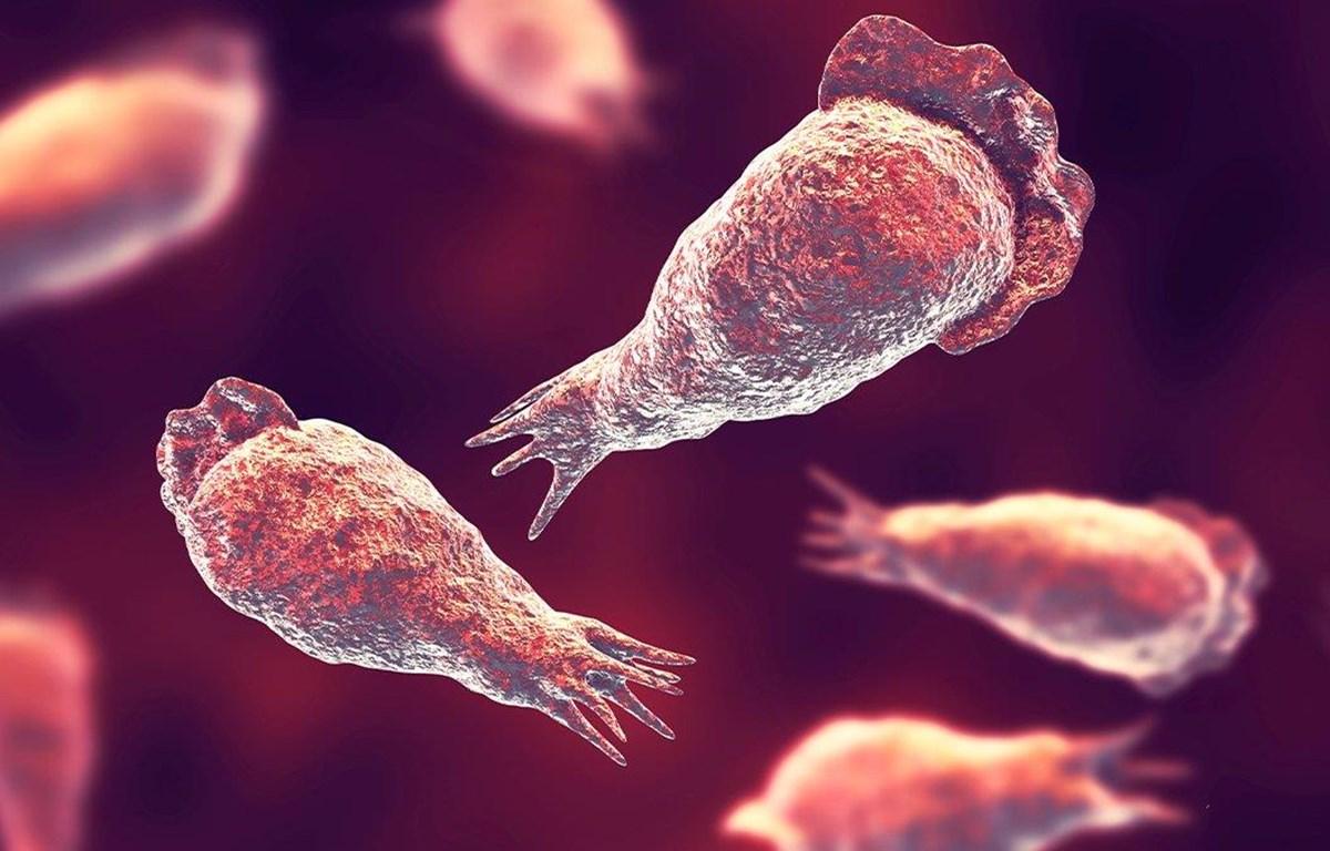 Loại amip ăn não có khả năng gây tử vong. (Nguồn: