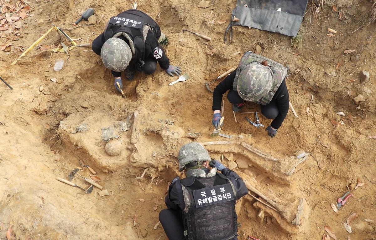 Khai quật hài cốt các binh sỹ thiệt mạng trong Chiến tranh Triều Tiên (1950-1953) tại Cheorwon, Khu phi quân sự liên Triều, ngày 10/4/2020. (Ảnh: Yonhap/TTXVN)