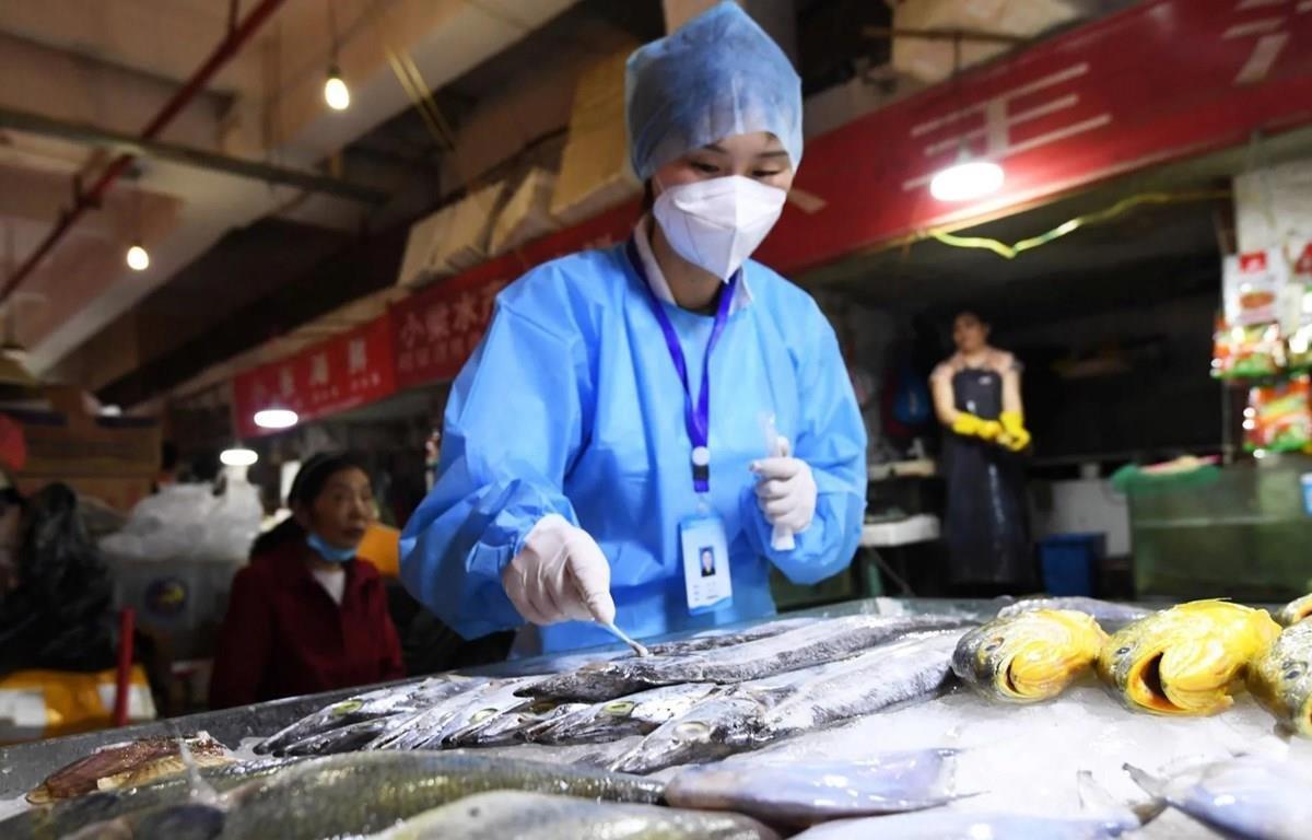 Nhân viên y tế Trung Quốc lấy mẫu kiểm tra virus SARS-CoV-2 trên sản phẩm hải sản đông lạnh nhập khẩu. (Nguồn: Reuters)