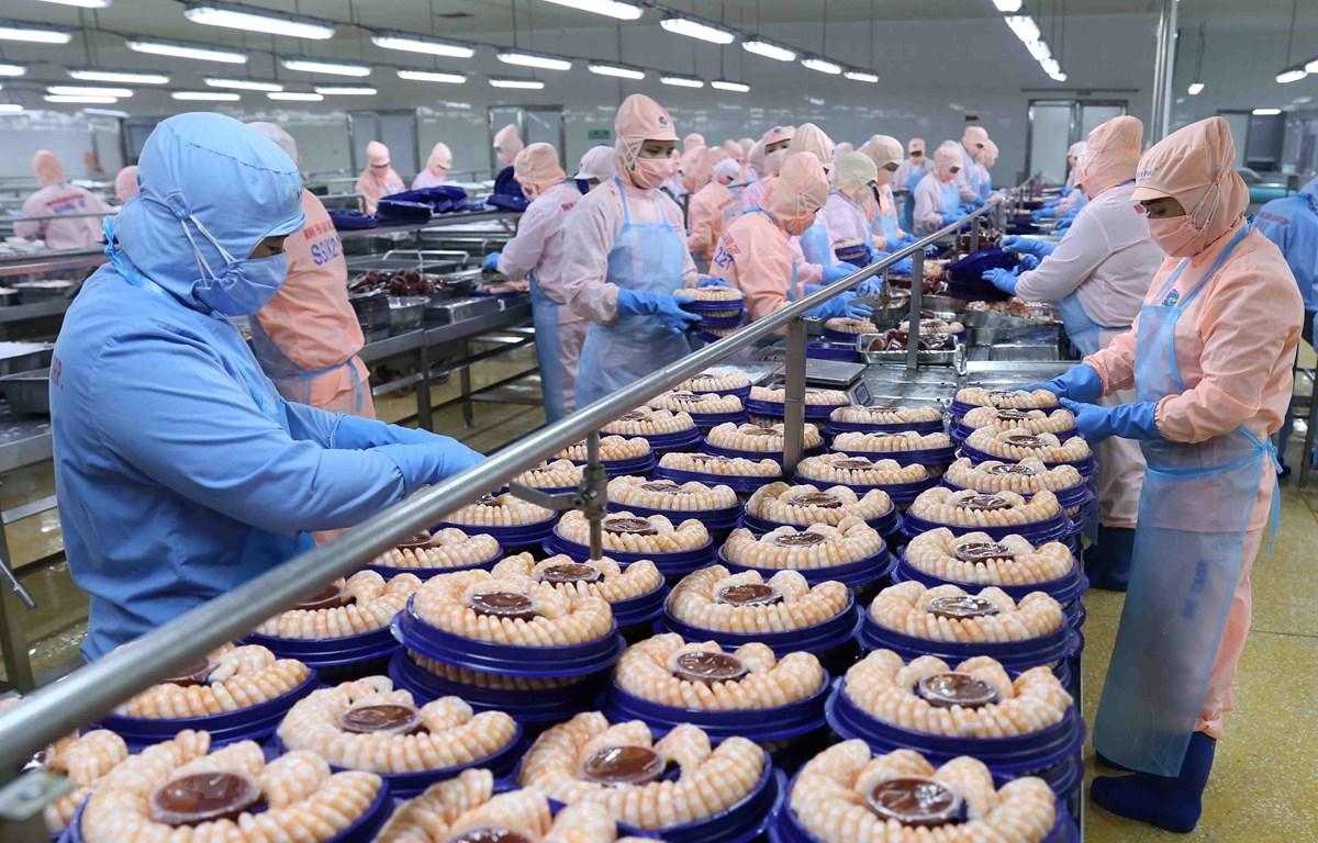 Chế biến tôm xuất khẩu tại nhà máy của Tập đoàn Minh Phu Seafood Corp tại Khu công nghiệp Nam Sông Hậu (Hậu Giang). (Ảnh: Vũ Sinh/TTXVN)