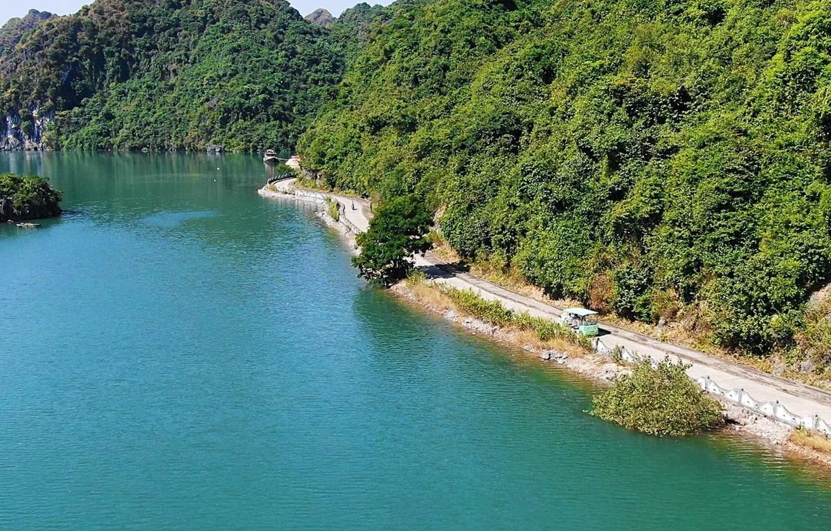 Một góc xanh trên đảo Cát Bà. (Ảnh: CTV/Vietnam+)