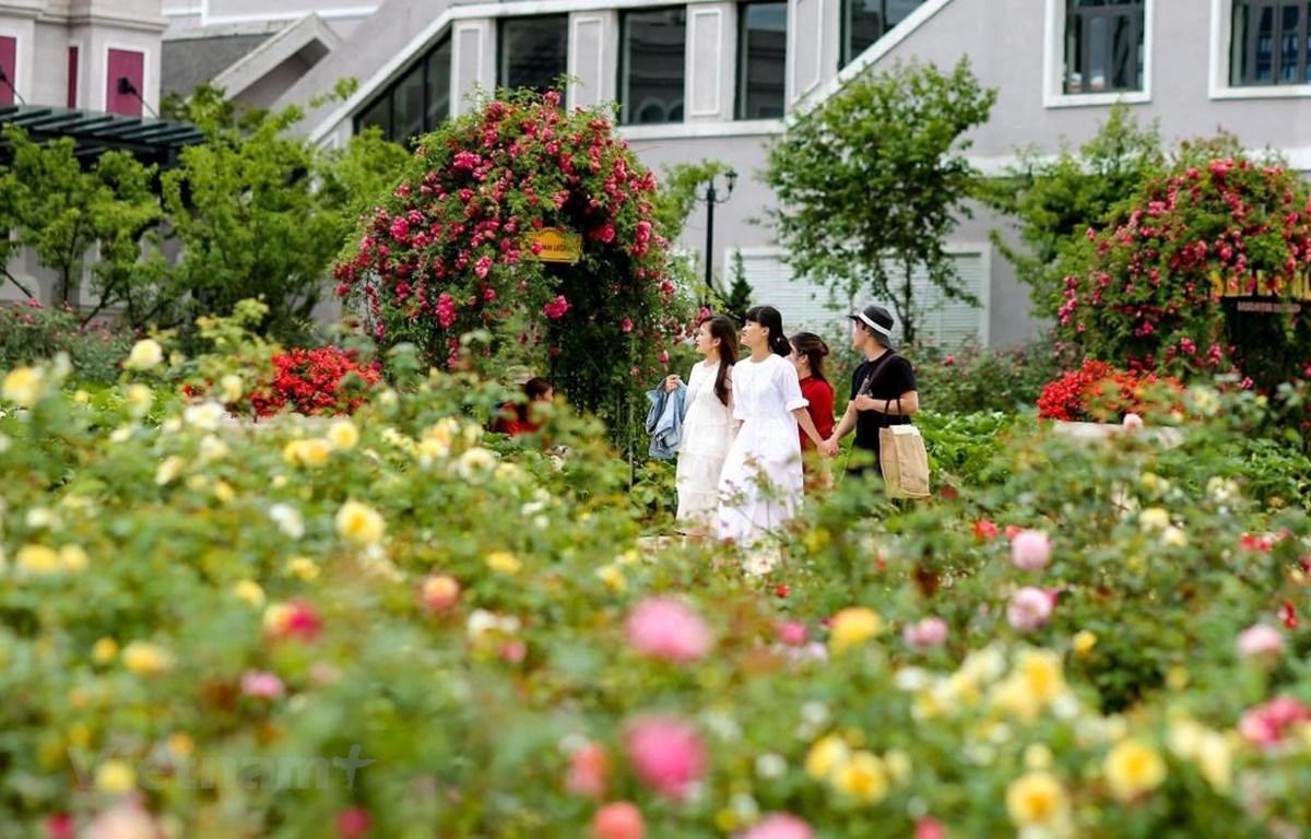 Du khách thăm quan vườn hoa hồng lớn nhất Việt Nam. (Ảnh: Nam Nguyễn/Vienam+)