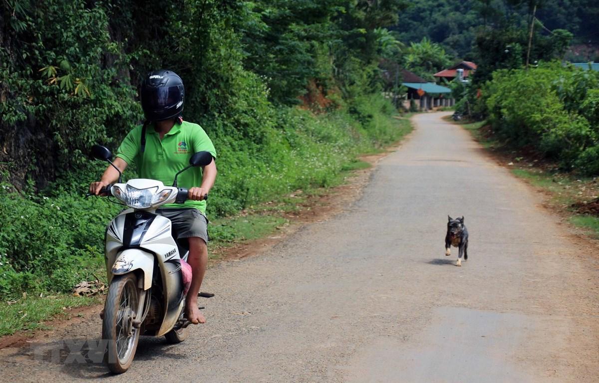 Thói quen thả rông, không rọ mõm cho chó, mèo ở nơi công cộng cùng với việc chuyển giao thời tiết nắng nóng là nguy cơ tiềm ẩn gây bùng phát bệnh, dịch dại. (Ảnh: Diệp Anh/TTXVN)