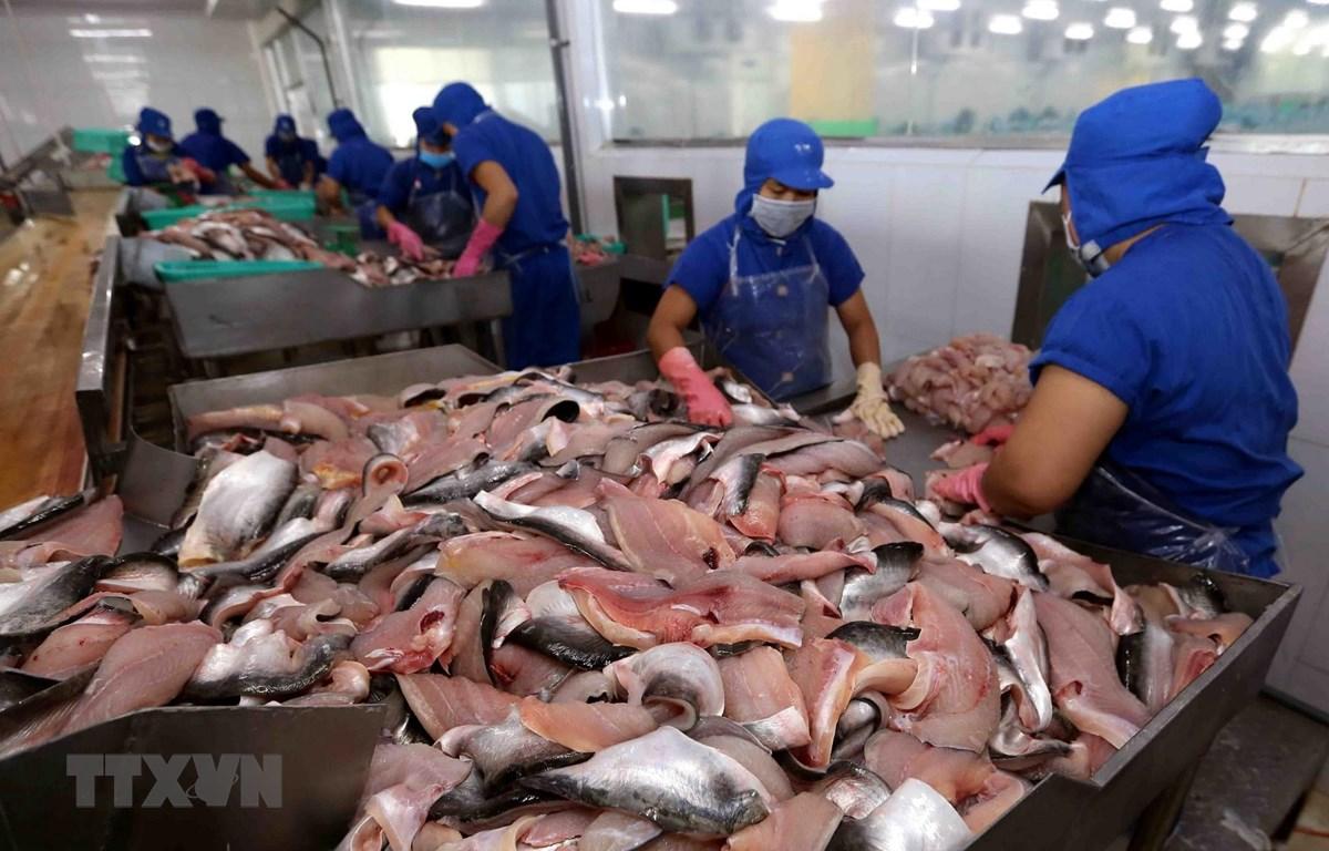 Chế biến cá tra phi lê xuất khẩu. (Nguồn: TTXVN)