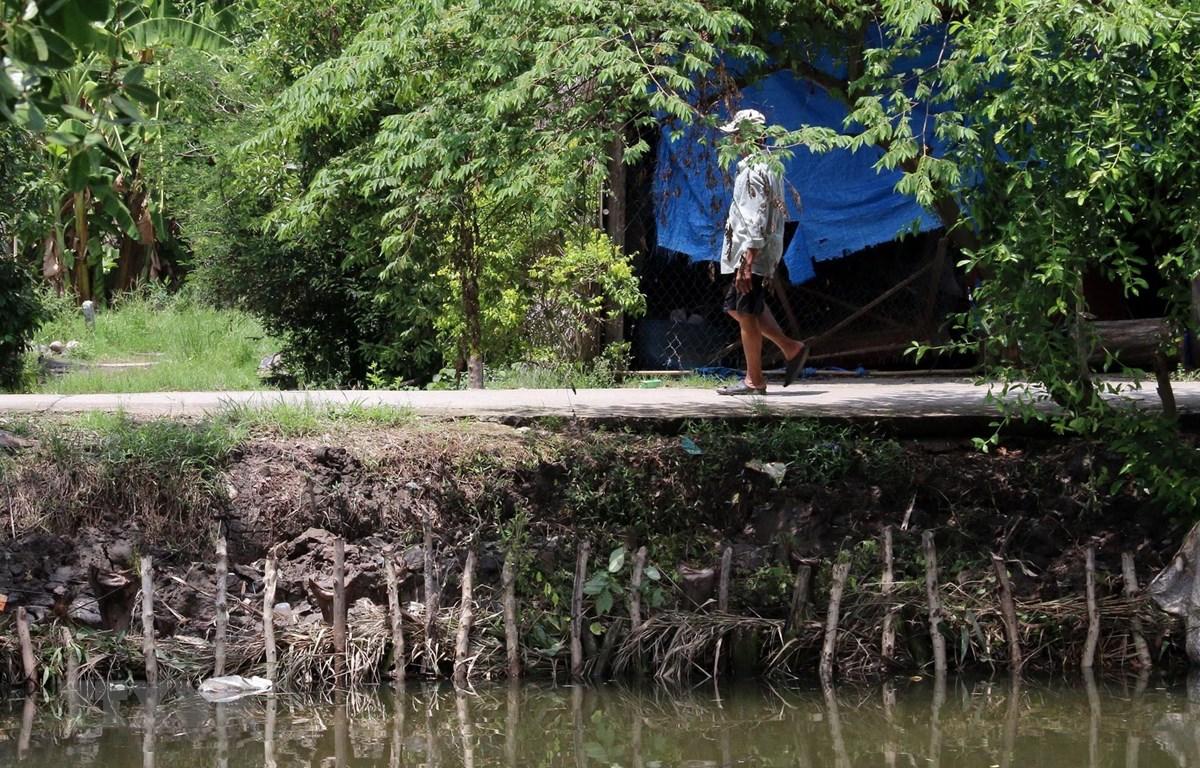 Bờ sông thuộc địa bàn xã Tây Yên, huyện An Biên, bị sạt lở nghiêm trọng. (Ảnh: Lê Sen/TTXVN)