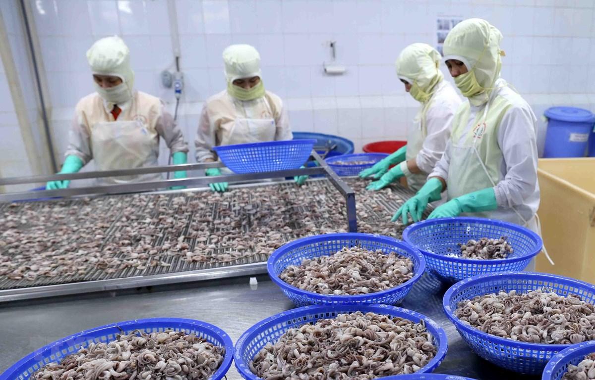 Thị trường EU đang là thị trường xuất khẩu thủy sản đứng thứ hai của Việt Nam, chiếm trọng 17% tổng giá trị xuất khẩu thủy sản. (Ảnh: TTXVN)