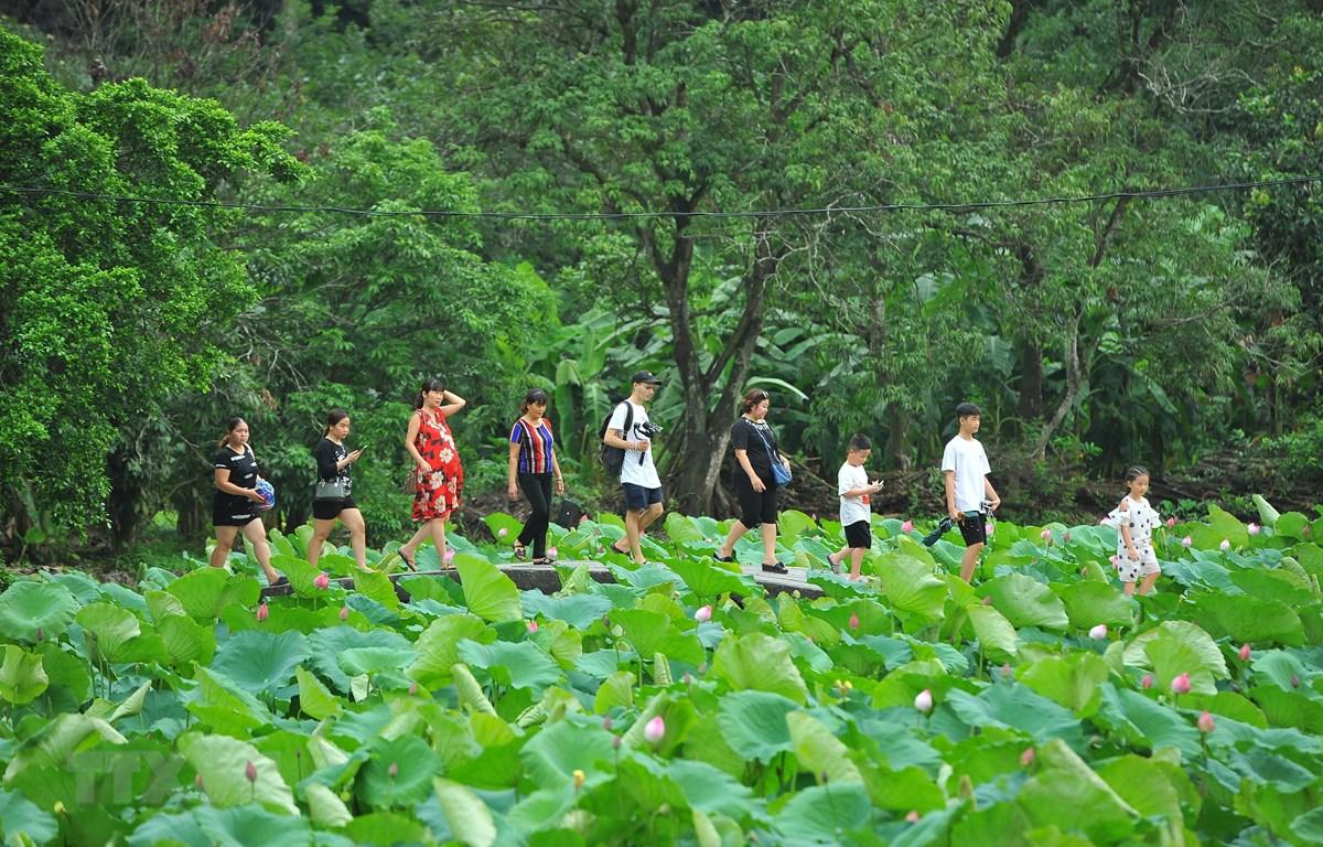 Nhiều du khách nước ngoài rất thích đến Bích Động, Ninh Bình vào mùa sen nở để được thưởng thức khung cảnh nên thơ tại đây. (Ảnh: Minh Đức/TTXVN)